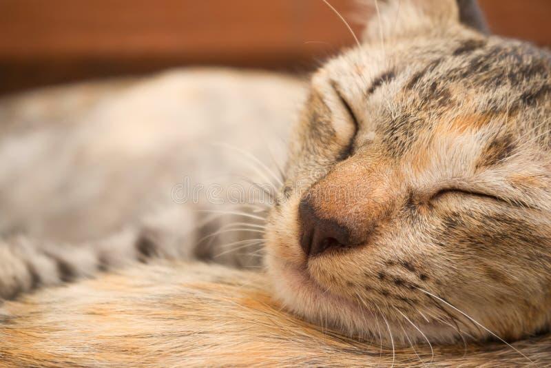 Gatto di Brown che dorme su un altro gatto fotografia stock libera da diritti