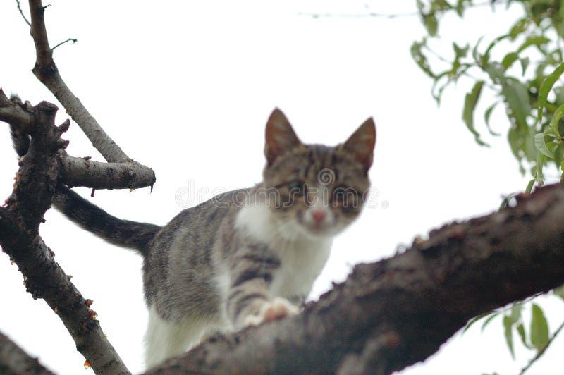 Gatto di caccia su un albero fotografia stock libera da diritti