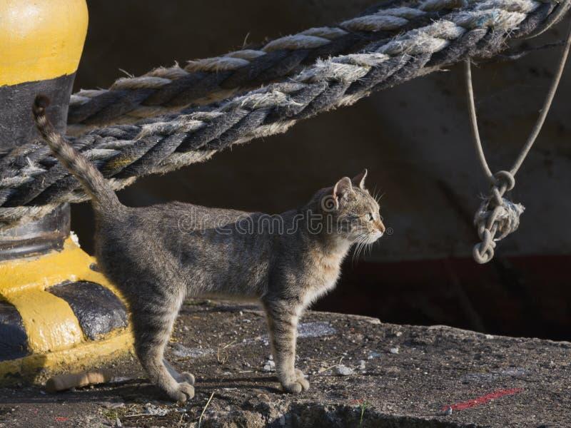 gatto di Grigio-Brown su un ancoraggio del mare immagine stock libera da diritti