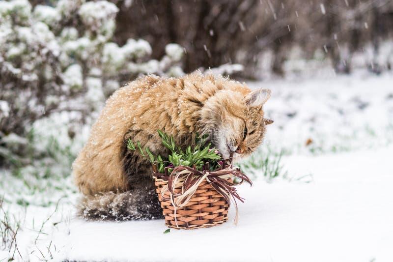 Gatto di Natale - è tempo di celebrare il nuovo anno! fotografie stock