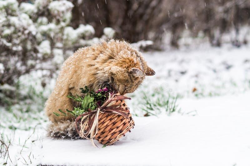 Gatto di Natale - è tempo di celebrare il nuovo anno! fotografia stock