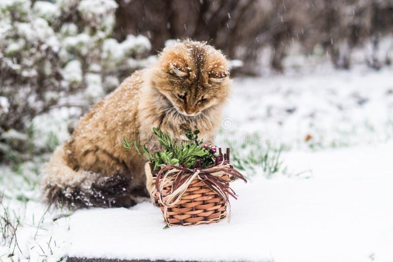 Gatto di Natale - è tempo di celebrare il nuovo anno! immagini stock