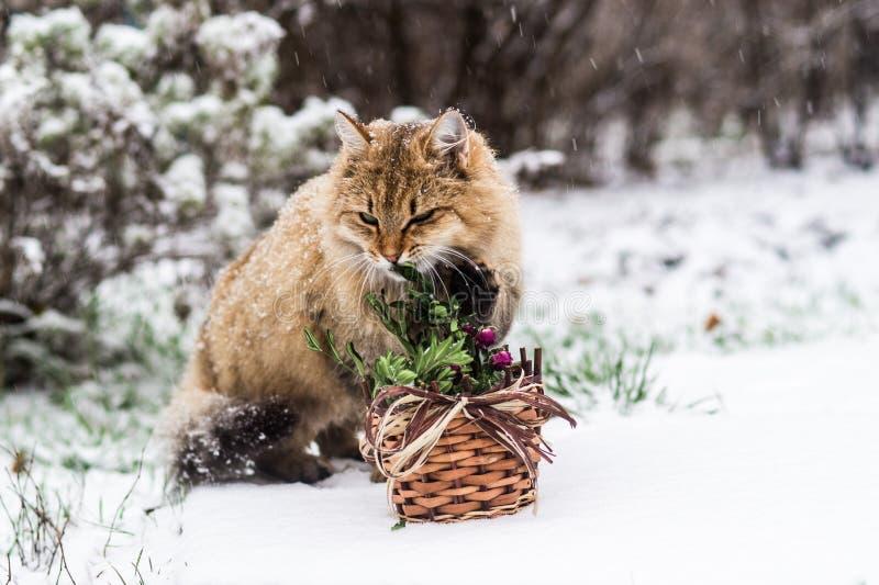Gatto di Natale - è tempo di celebrare il nuovo anno! immagine stock