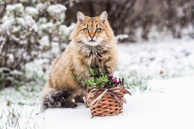 Gatto di Natale - è tempo di celebrare il nuovo anno! fotografie stock libere da diritti