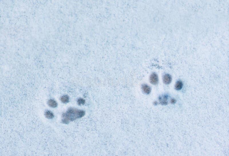 Gatto di orme nella neve fotografia stock