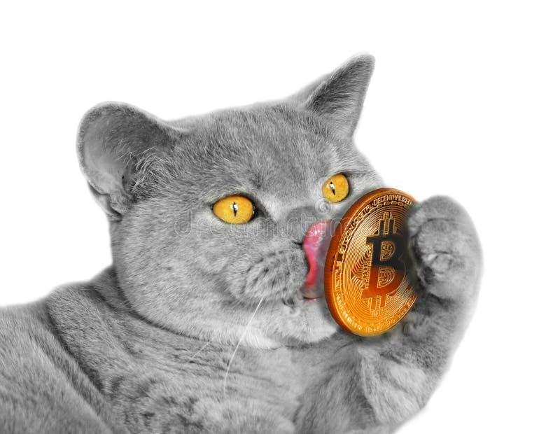 gatto e un bitcoin)