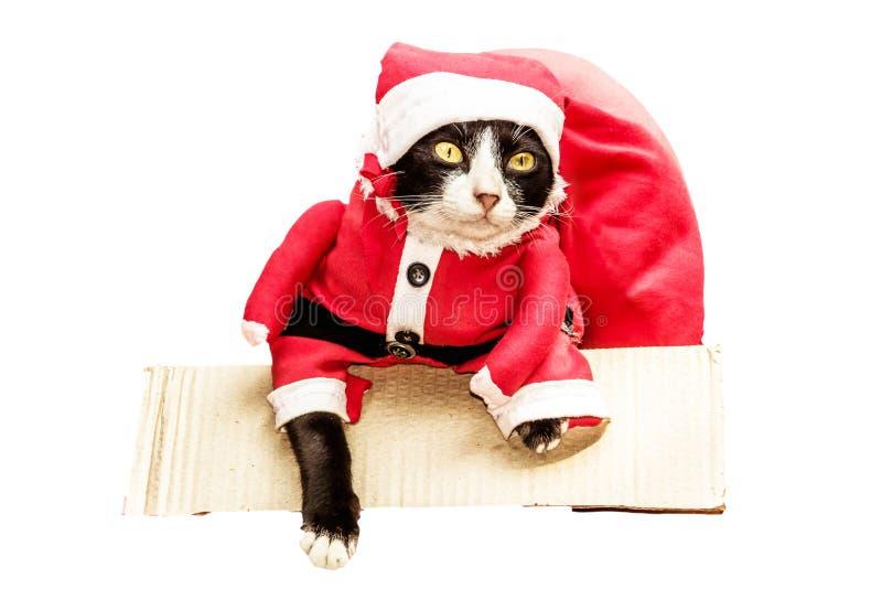 Gatto di Santa nella scatola con la borsa rossa del grande regalo su un fondo bianco immagine stock