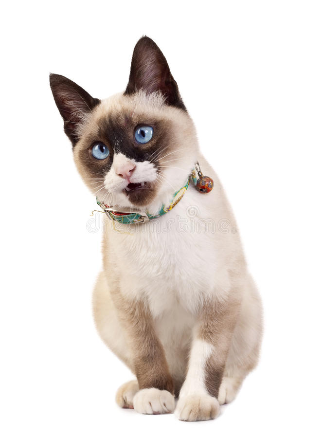 Gatto di sguardo curioso fotografia stock