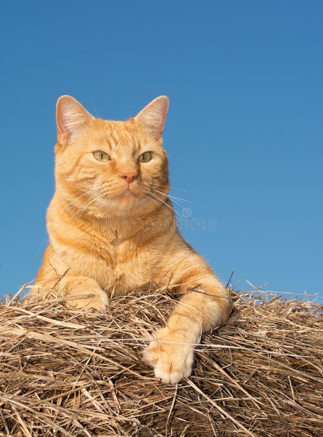 Gatto di soriano arancio bello sulla cima di una balla di fieno immagine stock libera da diritti