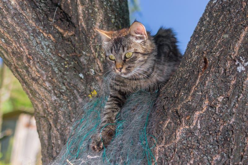 Gatto di soriano che si nasconde nell'angolo isolato su un ramo di albero nel giardino di estate fotografie stock libere da diritti