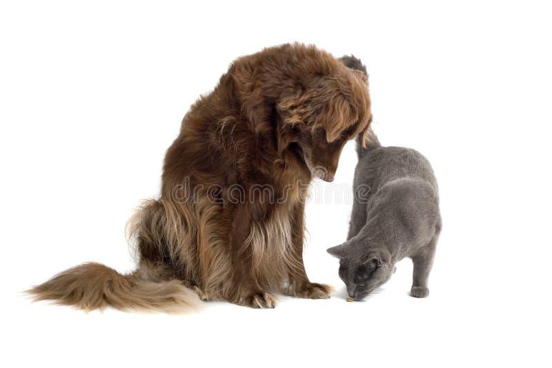 Gatto di sorveglianza del cane fotografia stock libera da diritti