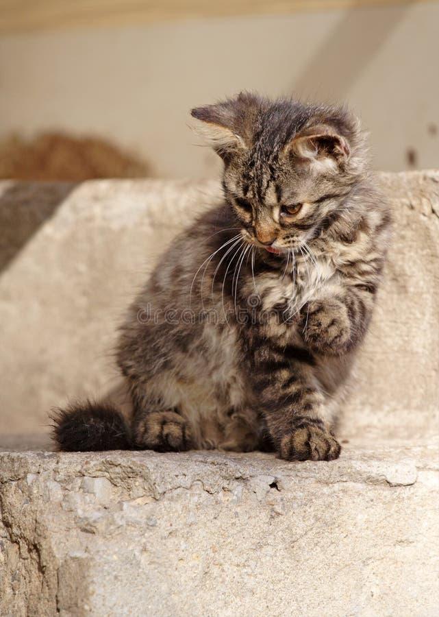 Gatto di Tabby fotografie stock