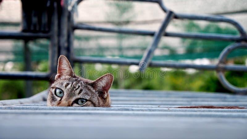 Gatto di Tabby che esamina la macchina fotografica fotografie stock