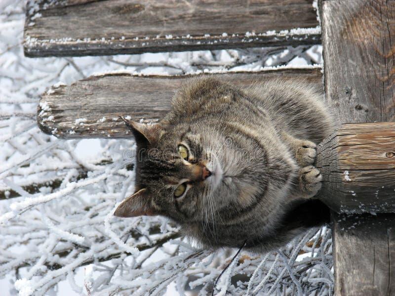 Gatto di Tabby con il contesto di inverno immagini stock