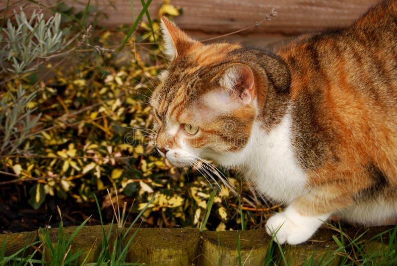 Gatto di tabby dello zenzero cammuffato dalle piante fotografia stock libera da diritti