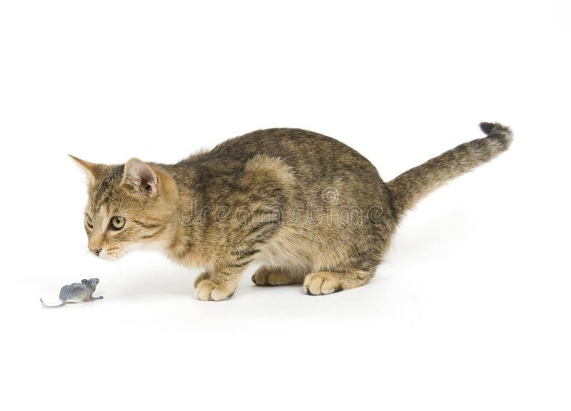 Gatto di Tabby e mouse del giocattolo fotografia stock libera da diritti
