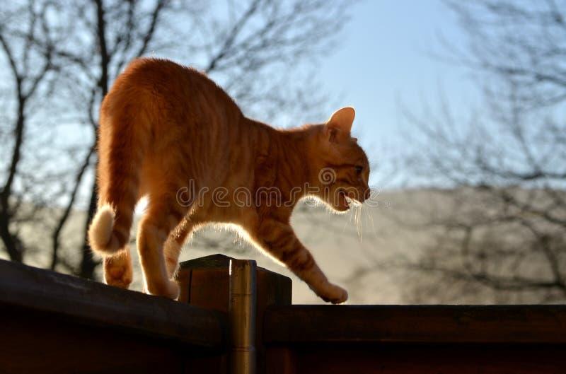 Gatto di Tom - bestia della preda immagine stock libera da diritti