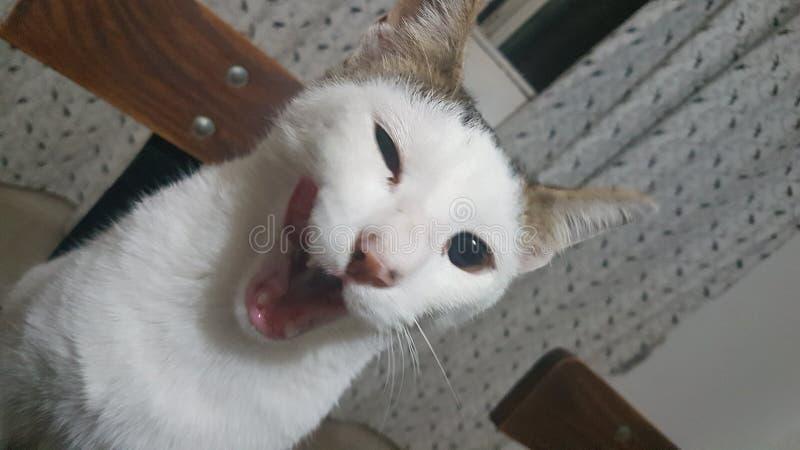 Gatto di Winky immagini stock libere da diritti