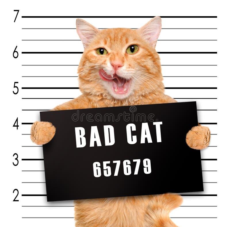 Gatto difettoso fotografie stock libere da diritti