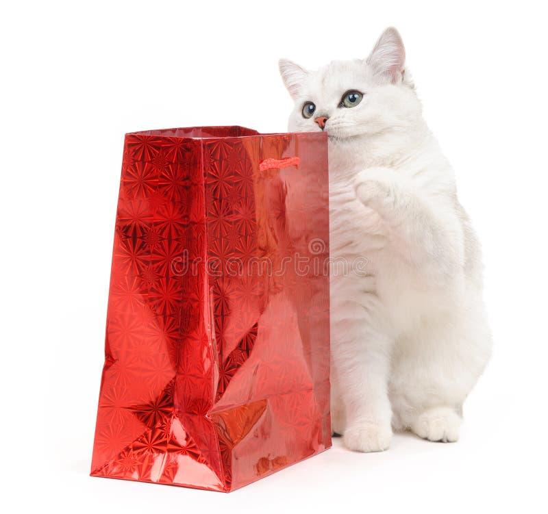 Gatto divertente britannico con un regalo fotografia stock