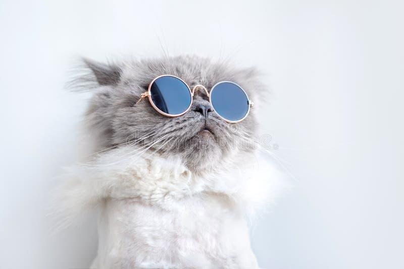 Gatto divertente che posa in occhiali da sole fotografia stock libera da diritti