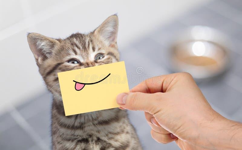 Gatto divertente con il sorriso e la lingua su cartone che si siede vicino all'alimento fotografia stock libera da diritti
