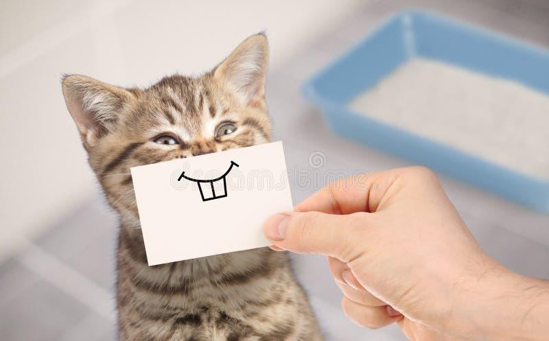 Gatto divertente con il sorriso pazzo che si siede vicino alla toilette pulita fotografia stock