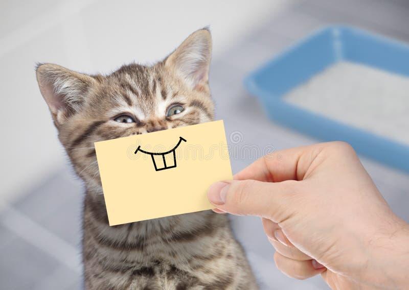 Gatto divertente con il sorriso pazzo che si siede vicino alla toilette pulita fotografia stock libera da diritti