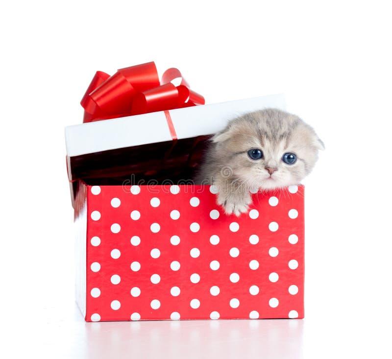 Gatto divertente del bambino in contenitore di regalo rosso del puntino di Polka immagini stock
