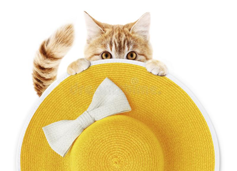 Gatto divertente dello zenzero con il cappello giallo della paglia rotonda della spiaggia di estate con l'arco bianco isolato nel fotografie stock
