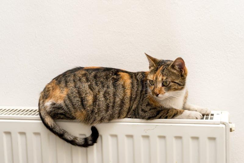 Gatto domestico che si rilassa su un radiatore fotografia stock