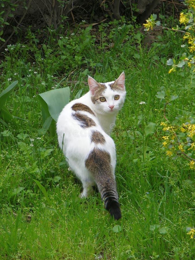 Gatto domestico in giardino fotografia stock