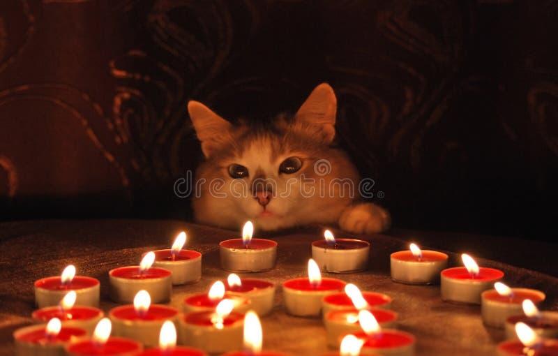 Gatto e candele burning immagini stock
