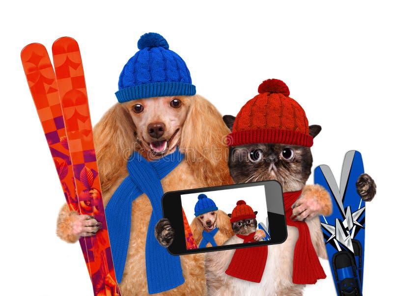 Gatto e cane che prendono un selfie insieme ad uno smartphone immagine stock libera da diritti