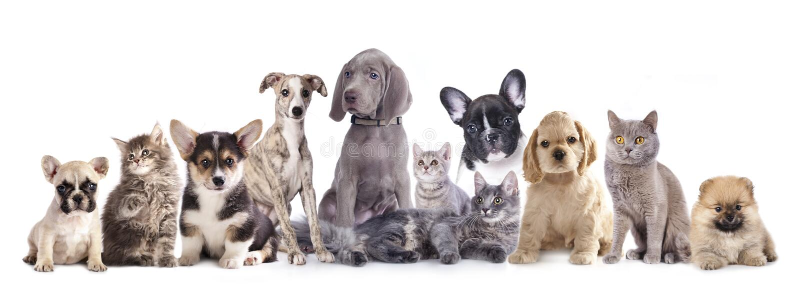 Gatto e cane del gruppo