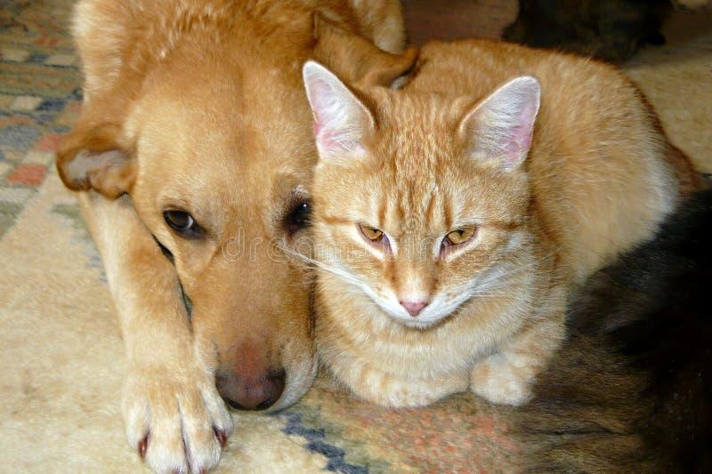 Gatto e cane dell'animale domestico immagini stock libere da diritti