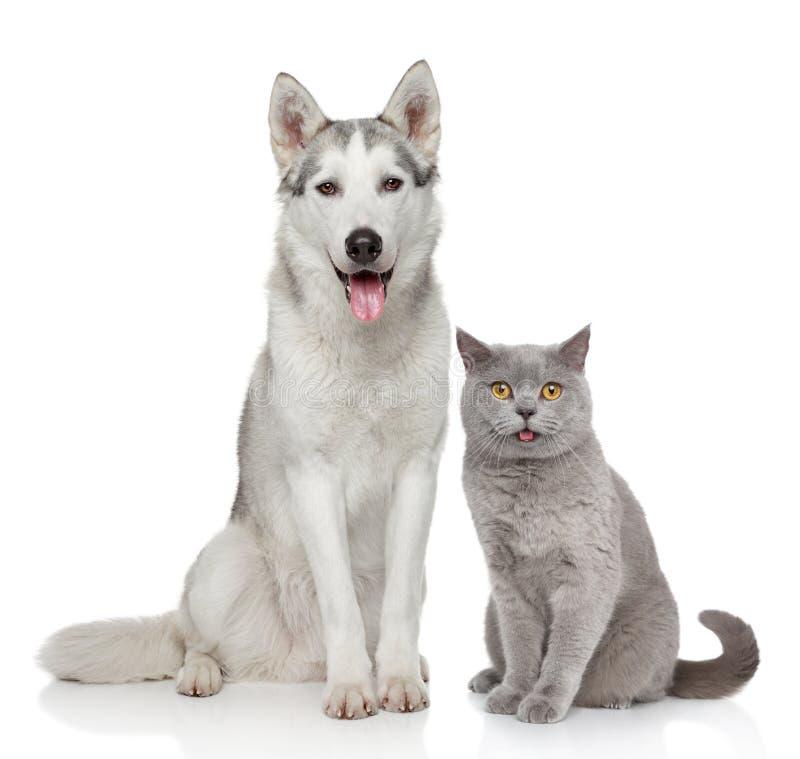 Gatto e cane insieme su un fondo bianco fotografia stock