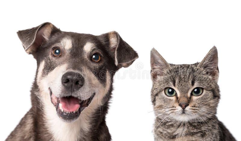 Gatto e cane isolati insieme su bianco immagini stock libere da diritti