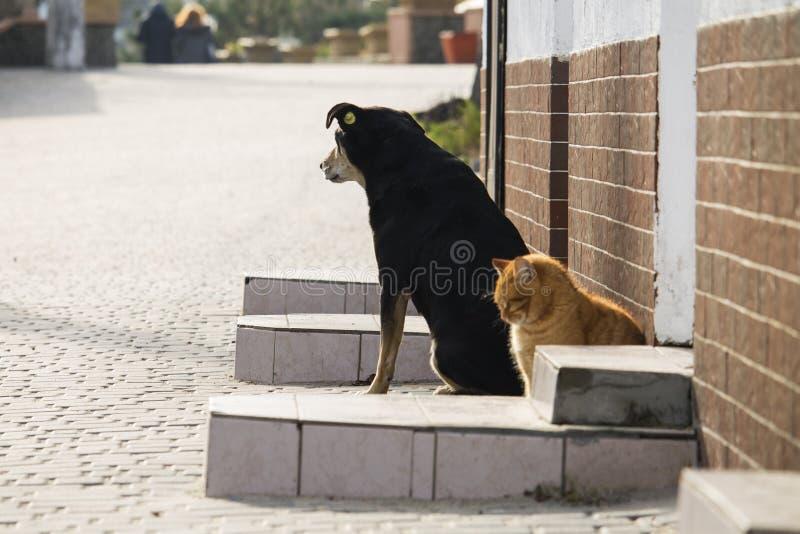 Gatto e cane smarriti su una via immagine stock libera da diritti