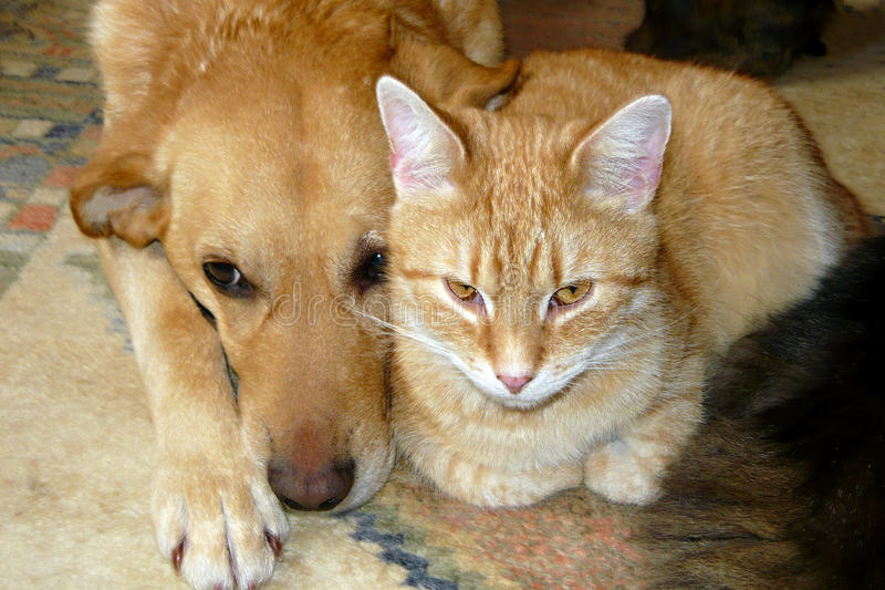 Gatto e cane svegli fotografia stock