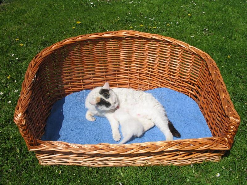 Gatto e gattino immagine stock
