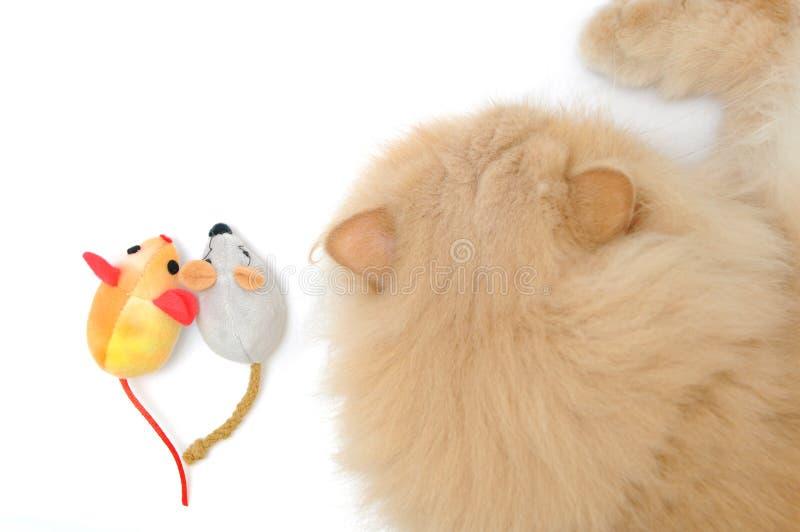 Gatto e mouse fotografia stock