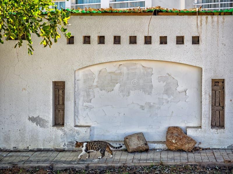 Gatto e parete in Sharm el-Sheikh, Sinai, fotografie stock