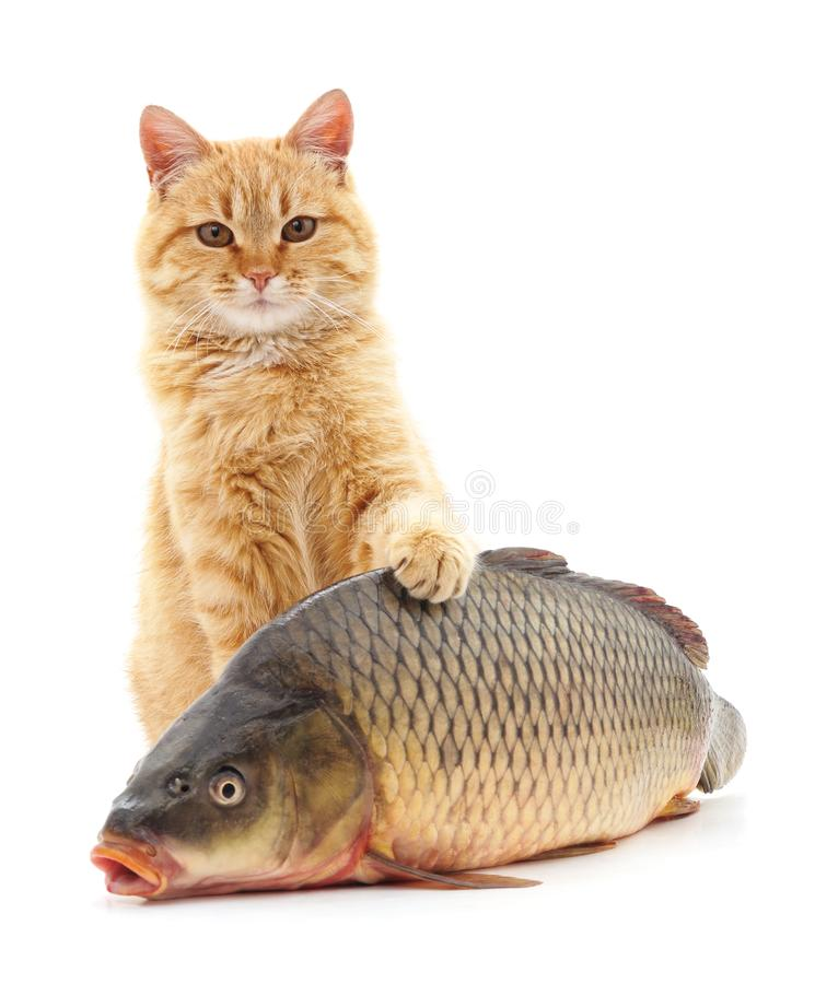 gatto e pesce fotografie stock