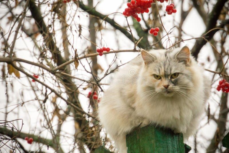 Gatto e sorba fotografie stock