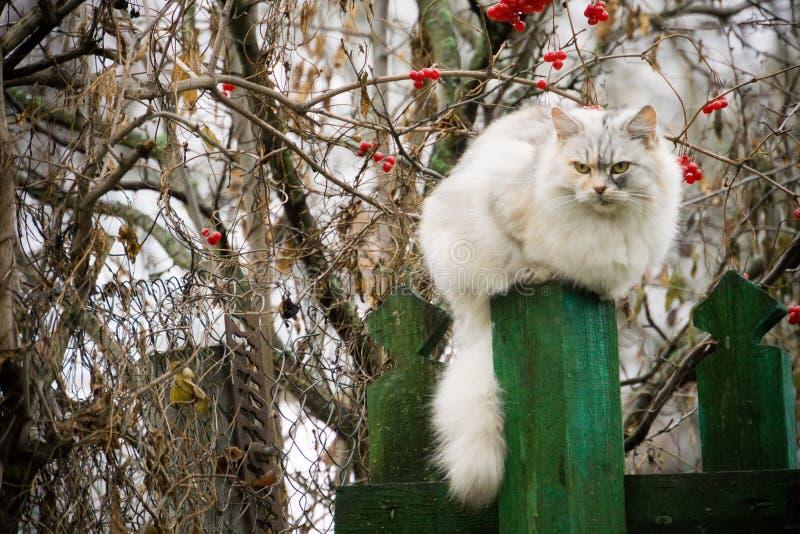 Gatto e sorba immagini stock