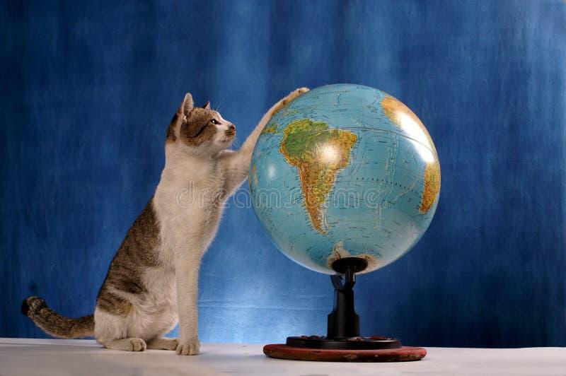 Gatto ed il mondo immagini stock libere da diritti