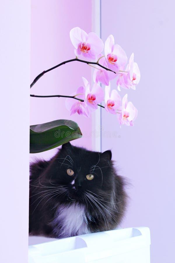 Gatto ed orchidee rosa sui precedenti fotografia stock libera da diritti