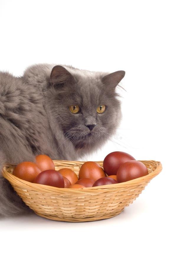 Gatto ed uova di Pasqua fotografia stock