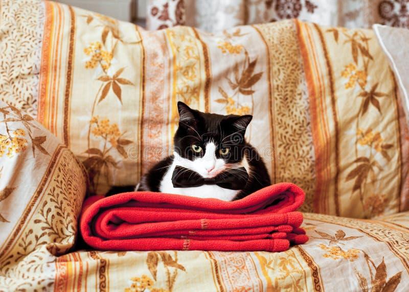 Gatto elegante sul sofà immagine stock
